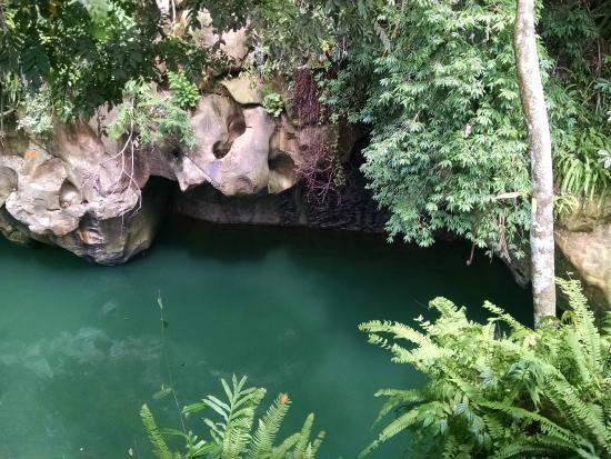 Green Lodge Tangkahan: Love this view