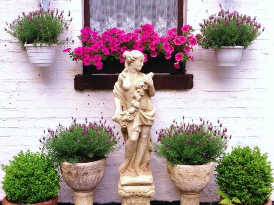 Der Schwan: Garten