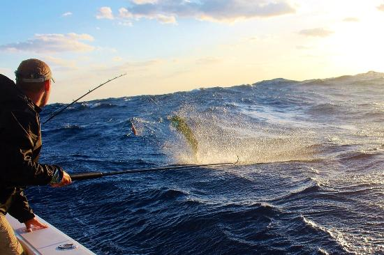 Mahi mahi charters bild von angler management for Fishing charters west palm beach