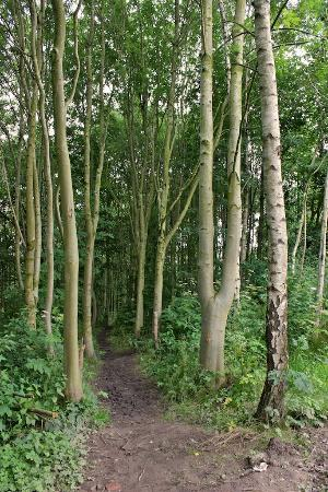 Brook Wood