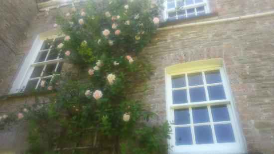 David Austin Climbing Rose Ballaminers House
