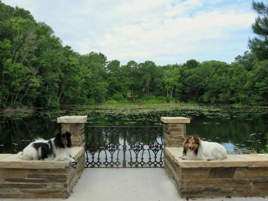 Jacksonville Arboretum And Gardens Picture Of Jacksonville Arboreteum Gardens Jacksonville