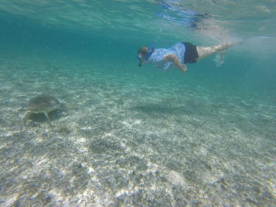Spotts Beach Sea Turtles