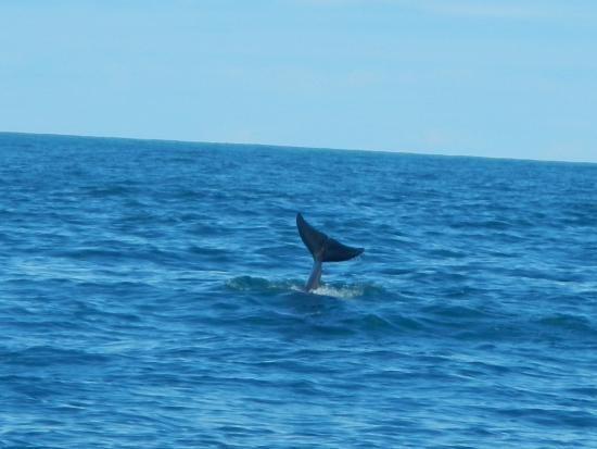 Uvita, คอสตาริกา: dolfijnen