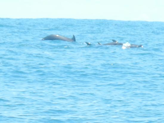 Увита, Коста-Рика: dolfijnen