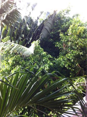Paraiso Azul's -Casa De Gopala: photo1.jpg