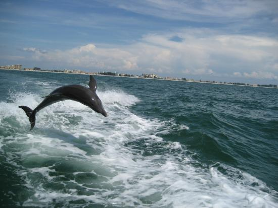 Beach Haven: Dolphin Cruise