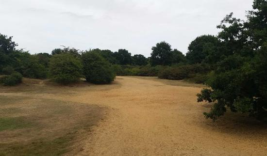 Dartford Heath