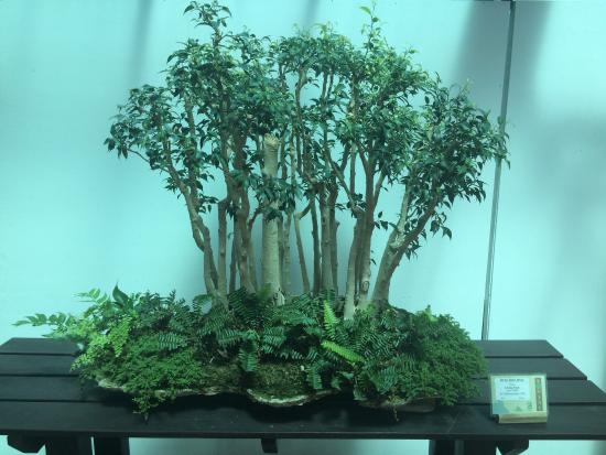 Bonsai Exhibits Many Different Trees Represented Picture Of Krohn Conservatory Cincinnati Tripadvisor