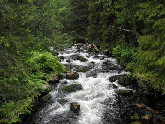 Dalarna, Schweden: Fulufjället national park