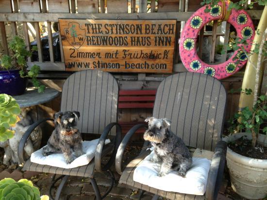 Redwoods Haus Bed and Breakfast : Beer garden