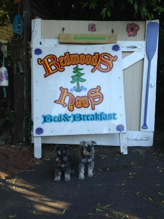 Redwoods Haus Bed and Breakfast : front entrance
