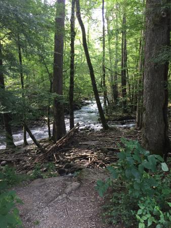 Bilde fra Berry Springs Lodge