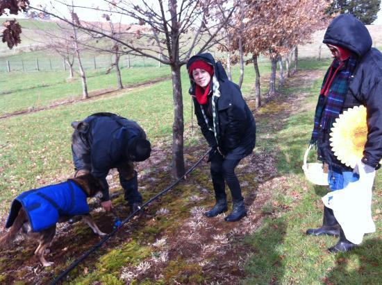Barrington, ออสเตรเลีย: Looking for truffles