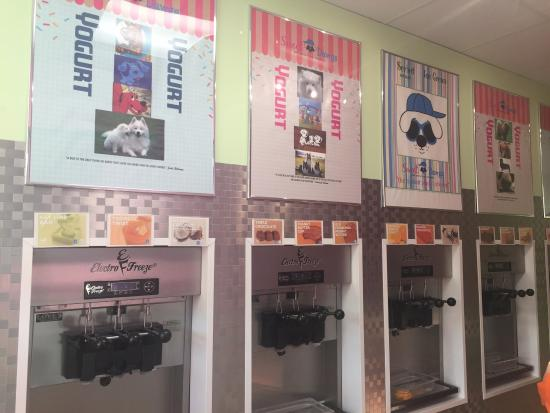 Sweet Dawgs Frozen Yogurt: you're options!!