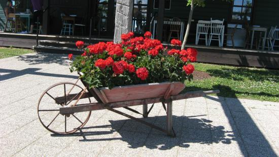 Williams Gate Bed and Breakfast Private Suites: chuck full of geraniums