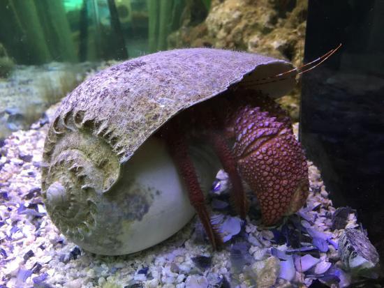 Rockport, TX: hermit crab