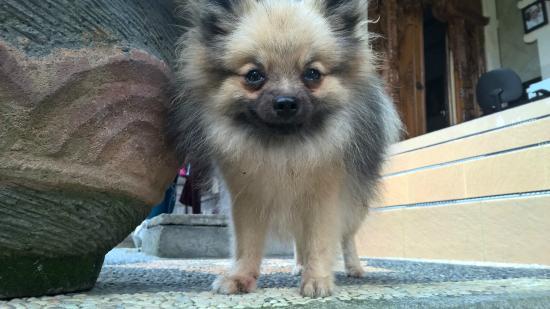 Ubud Sensasi Bungalow: watch dog