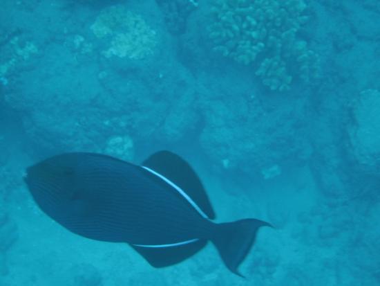Snorkel Bob's Lahaina