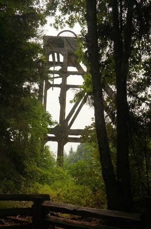 Nanaimo, Canada: Nice Forest Walk