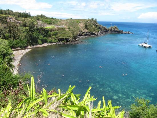 Honolua Bay: Blue water is so pristine and corals run the edges of the bay