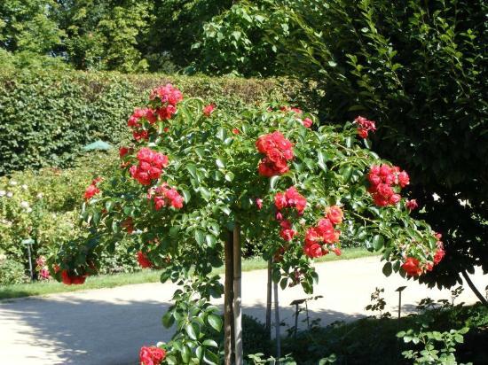 Ostdeutscher Rosengarten Forst (Lausitz)
