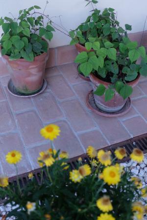 Agriturismo Rio Manzolo: i fiori e le erbe aromatiche