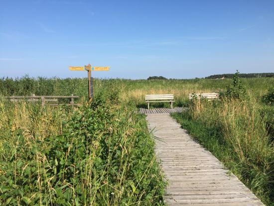 Ribnitz-Damgarten, Alemania: Tolle Landschaft / Wanderung mit Stop am Leuchturm mit Museum