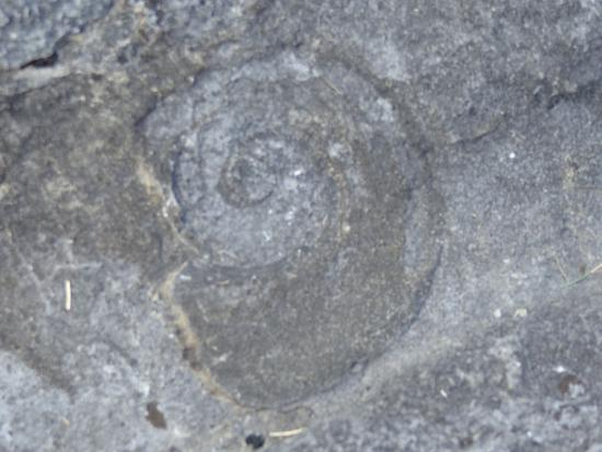 Goodsell Ridge Preserve: snail