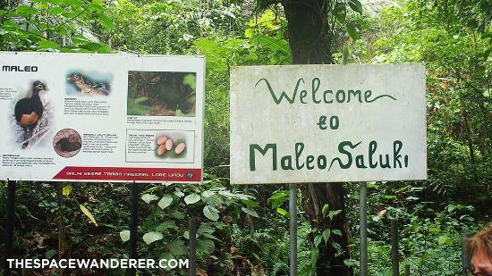 Taman Nasional Lore Lindu: Maleo Saluki