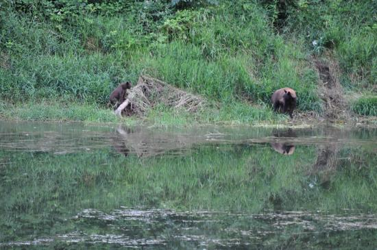 Eagle Tree Lodge : BEAR & CUB