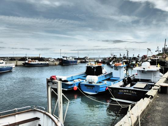 Links Hotel : Seahouses Harbour