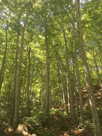 Foresta del Teso