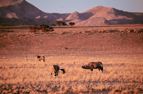 Tsondab Valley Scenic Reserve: Blick vom Bungalow