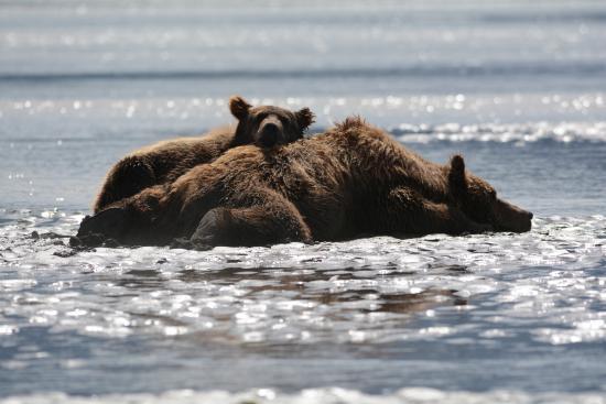 Soaring Eagle Lodge: Bear viewing!