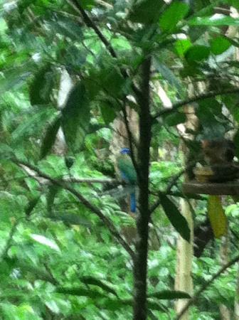 Tree Houses Hotel Costa Rica : one of many birds