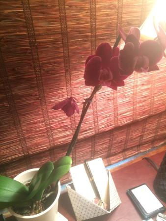 Antigua Inn: Live orchids in every room and scattered around the common areas, too!