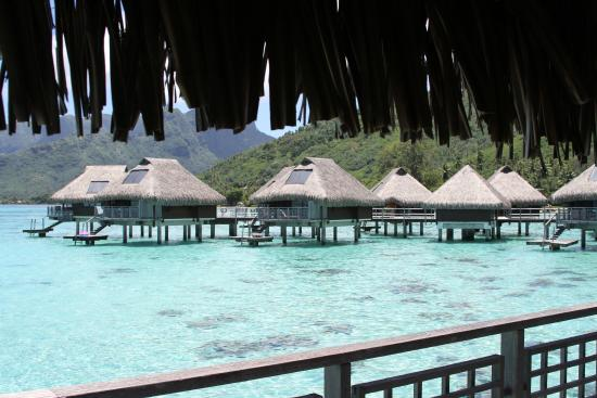 View From Overwater Bungalow 83 Picture Of Hilton Moorea
