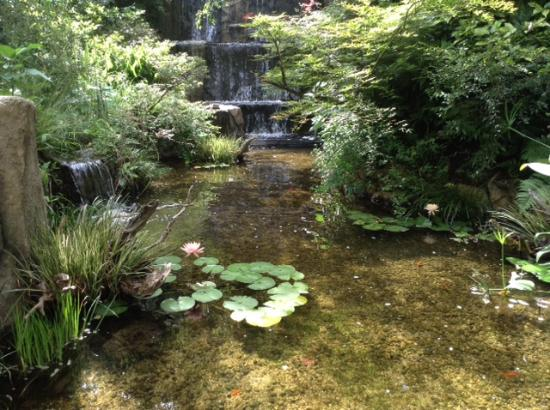 The Westin Tokyo: 滝のある庭園の池には可憐な睡蓮の花が咲いています