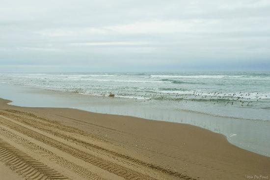 Florença, OR: Go to the coast while there