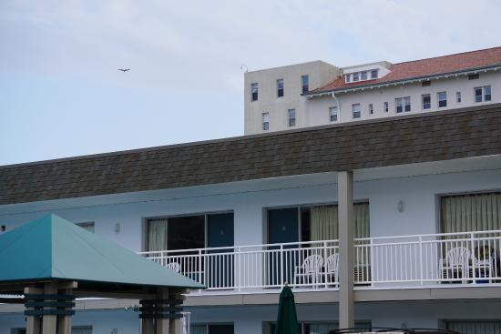 Impala Island Inn: The hotel