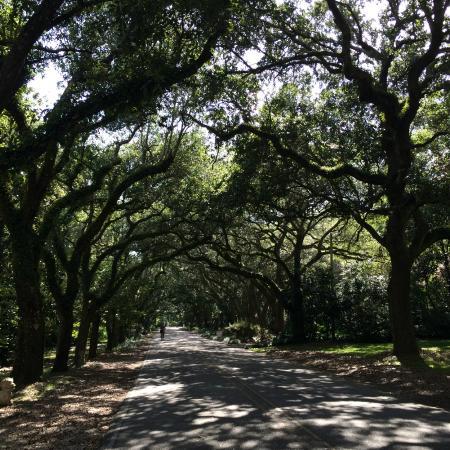 Magnolia Springs Bed & Breakfast: The Live Oak lined street