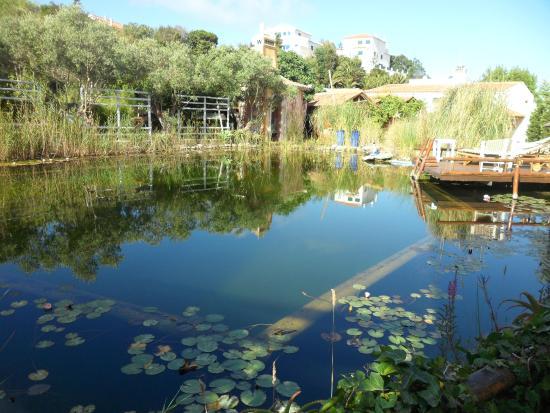 Eco Sound - Ericeira Ecological Resort: Eco Pool