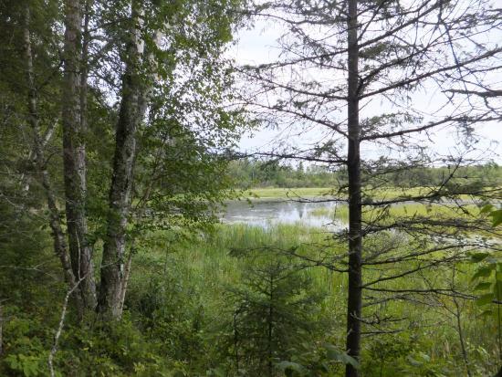 Deer River, MN: Mississippi River at Schoolcraft State Park