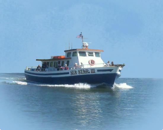 Sea Star III