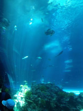 ... National Museum of Marine Biology and Aquarium, Pingtung - TripAdvisor