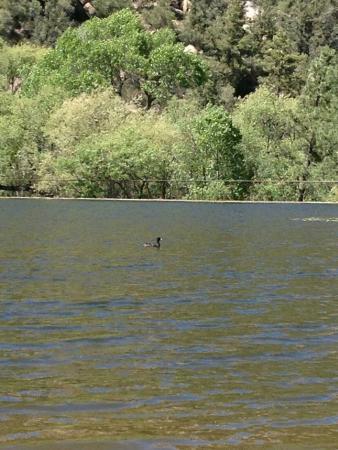 Tonto Basin, อาริโซน่า: Bartlett Reservoir