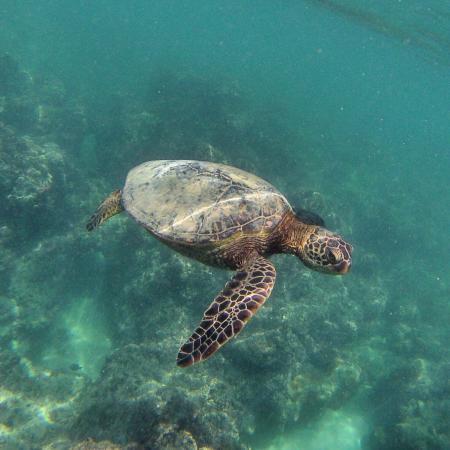 Kailua, HI: photo0.jpg