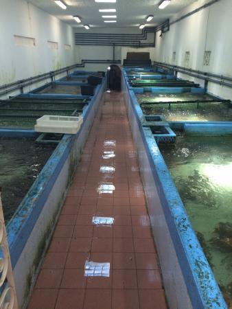 Atalaia, Portugal: Frutos do mar : la pépinière et la plage Prenez le temps de trouver ;)