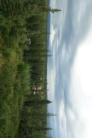 Healy, AK: Sorry it's sideways. View from the NorthView room